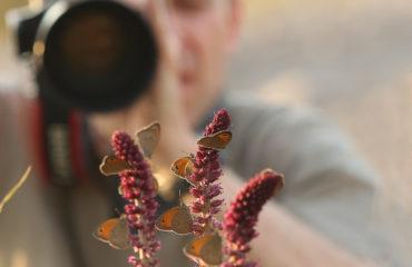 795A4501-Φωτογραφίζοντας πεταλούδες στην Λέσβο